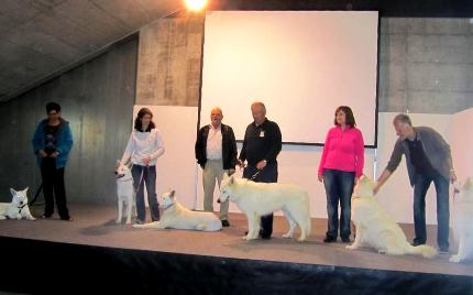 Foto v.l.n.r.: Akira, Anja, Alaska, Nanuc, Fiara und Hitch