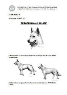 Der FCI-Standard Nr. 347