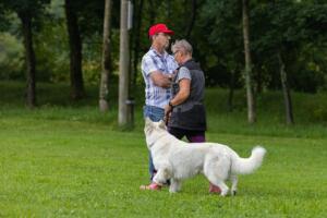 comp Sporthunde Weisser Schäfer 2021-022