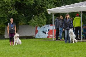 comp Sporthunde Weisser Schäfer 2021-036