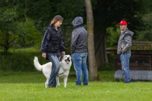 comp Sporthunde Weisser Schäfer 2021-048