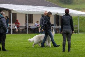 comp Sporthunde Weisser Schäfer 2021-054