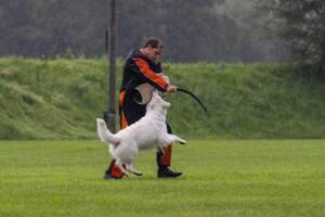 comp Sporthunde Weisser Schäfer 2021-102